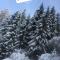 Lo sportivo sulla neve, a Folgarida si scia.